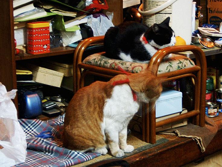 猫だらけのラーメン屋『昭和軒』が癒やしの空間すぎる