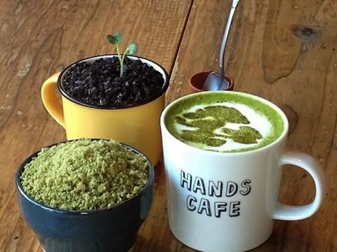 盆栽と触れ合える!渋谷東急ハンズに『BONSAI CAFE』(盆栽カフェ)が期間限定オープン