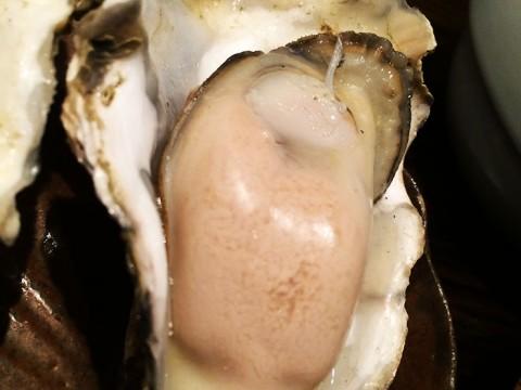 普通では味わえない極めてクリーミーな仙鳳趾産の牡蠣 / 牡蠣Bar