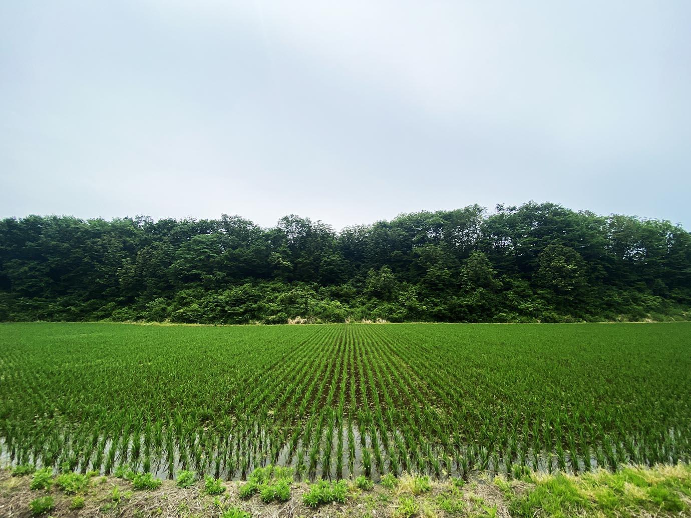 nikuyama-akita31