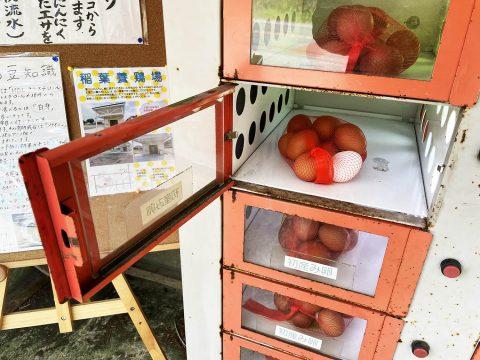 【激レアグルメ】富士山の伏流水で育った鶏の初産卵を買いに行こう / 運が良ければ二黄卵も入手可能