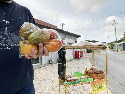 沖縄の路上で無人販売されてるマンゴー買ったら激しく安くて甘くてウマかった